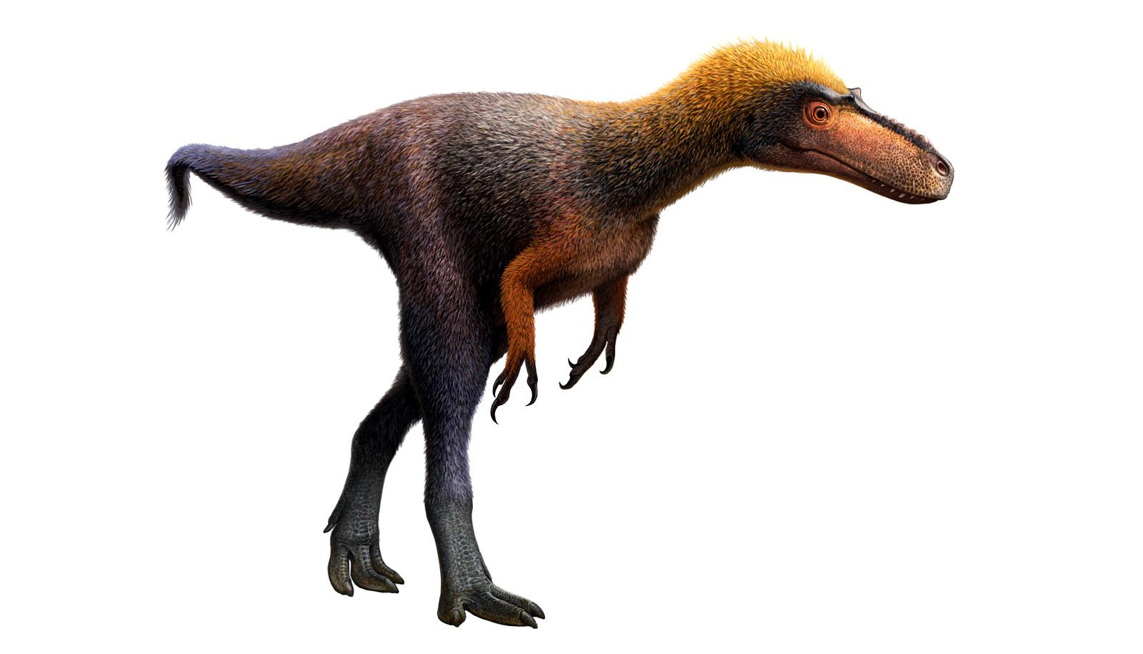 tyrannosaurus Suskityrannus hazelae -