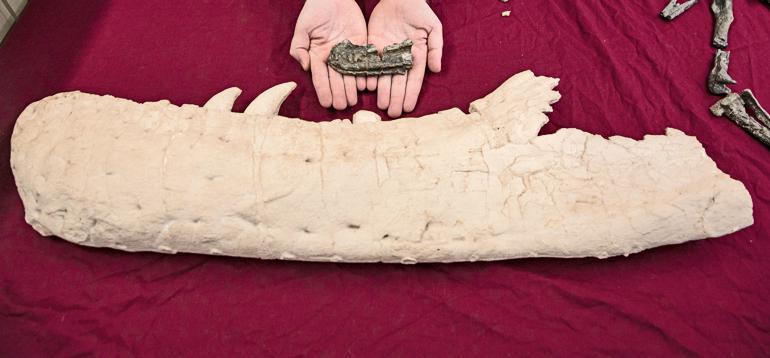 small and large tyrannosaur bones