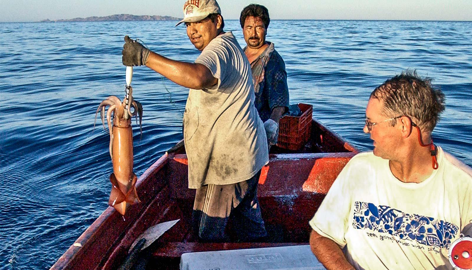 Biology Professor William Gilly, right, and two fishermen from Baja California capture a Humboldt squid for research (jumbo squid concept)