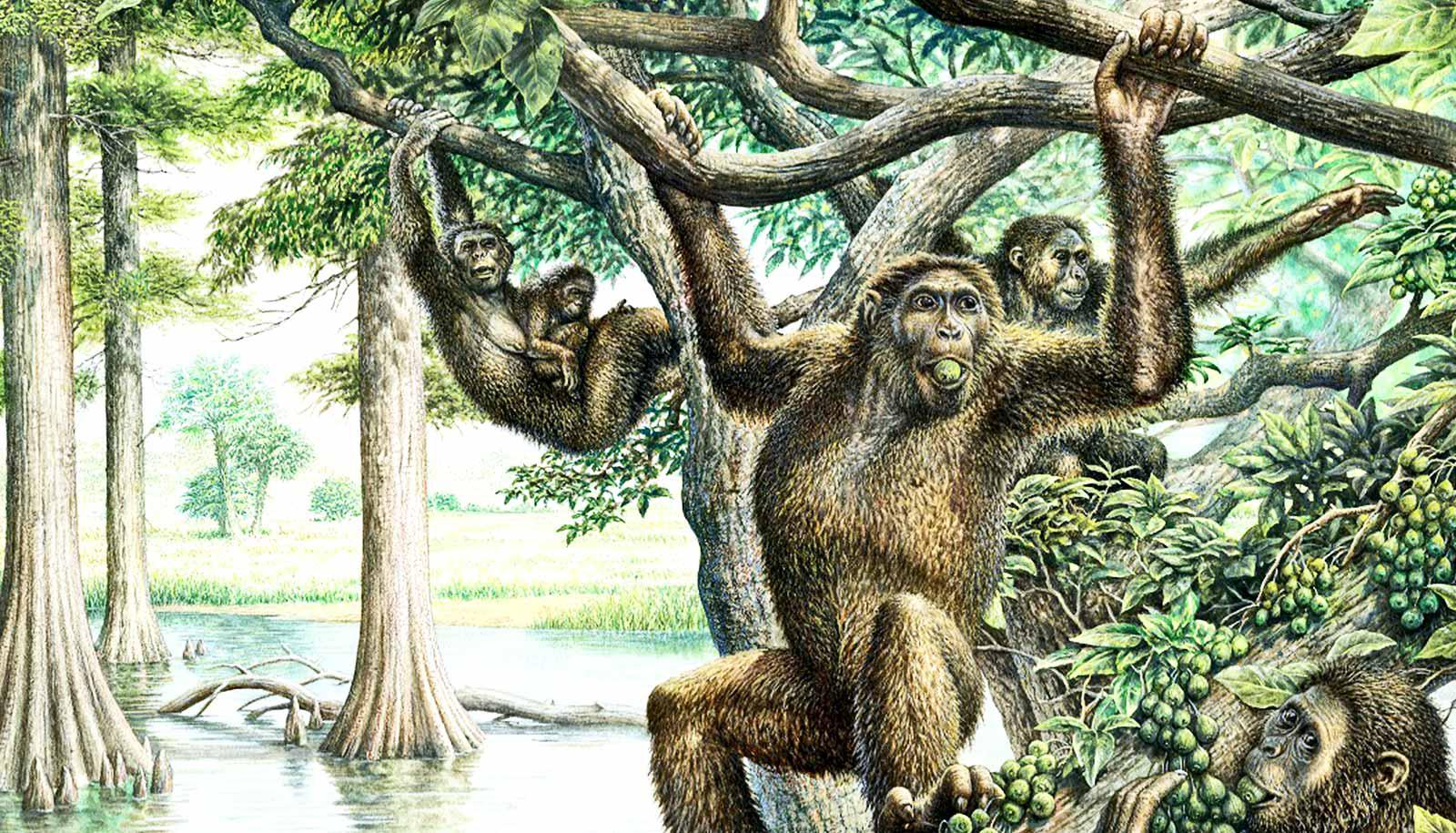 A group of Rudapithecus, which look like apes, swing through the trees and eat fruit