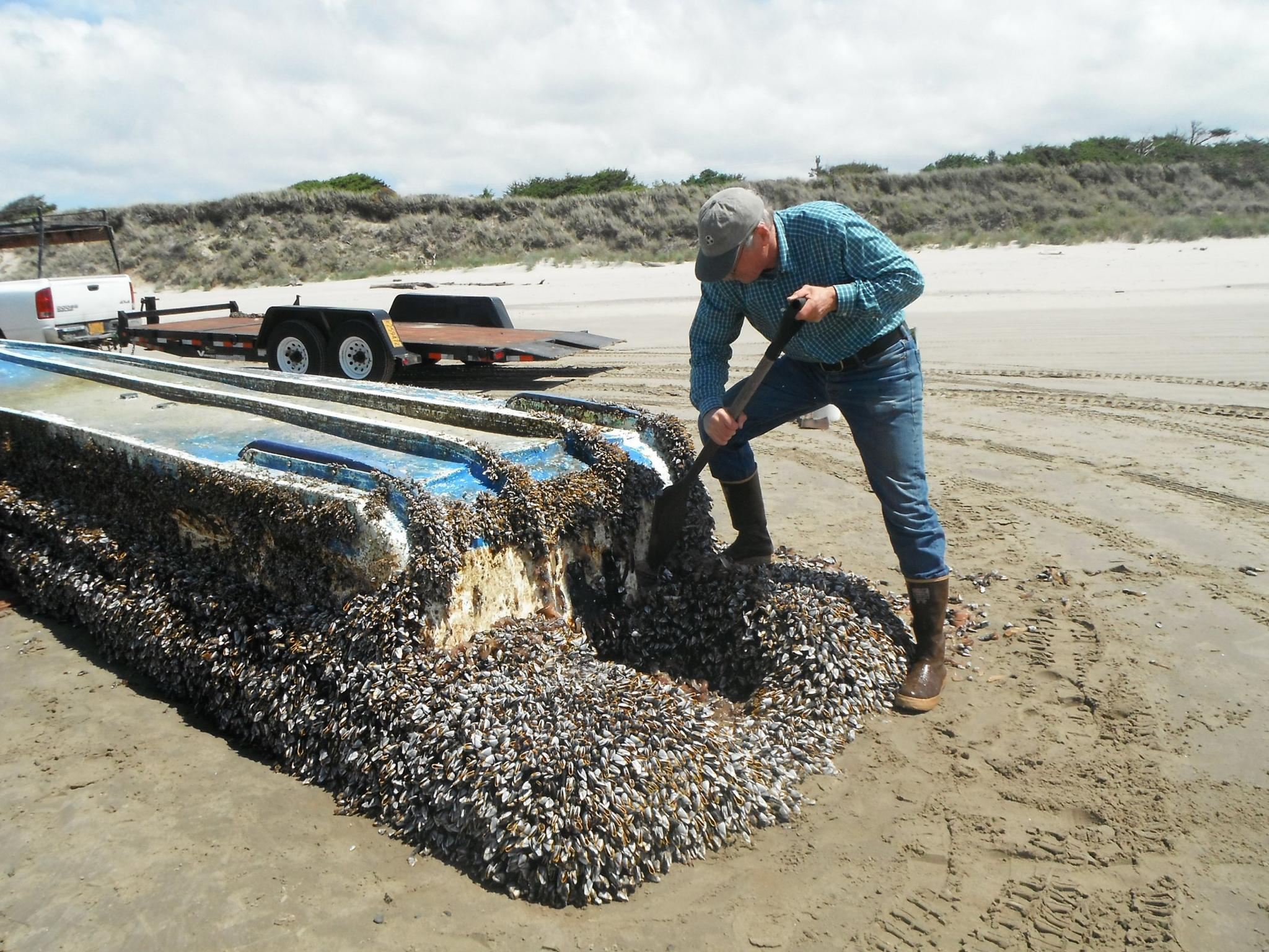 A Japanese vessel coated with sea creatures made its way to Washington after the tsunami.