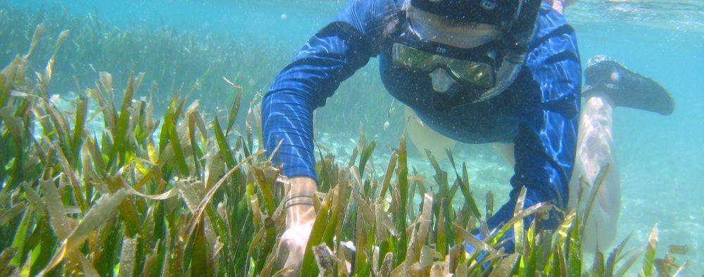 A diver explores healthy coral reefs in Guam.