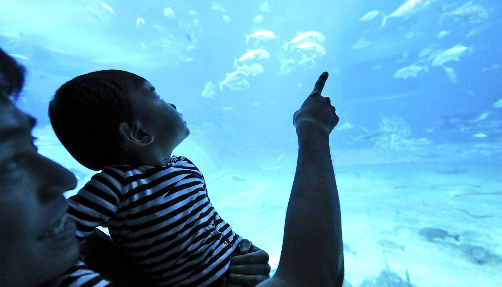 father and child at aquarium (science education concept)
