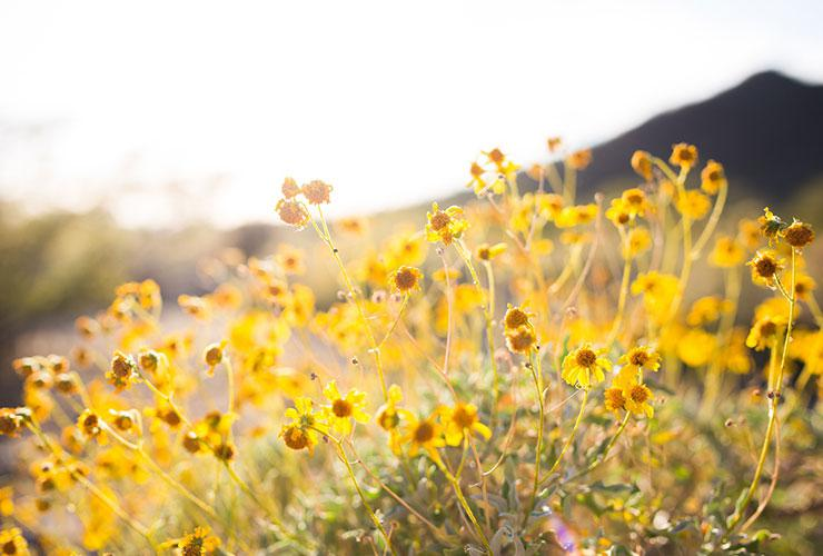 Holistic Alternatives for Allergy Relief by Jane Sandwood. Photograph of flowers blooming in a meadow by Alysa Bajenaru
