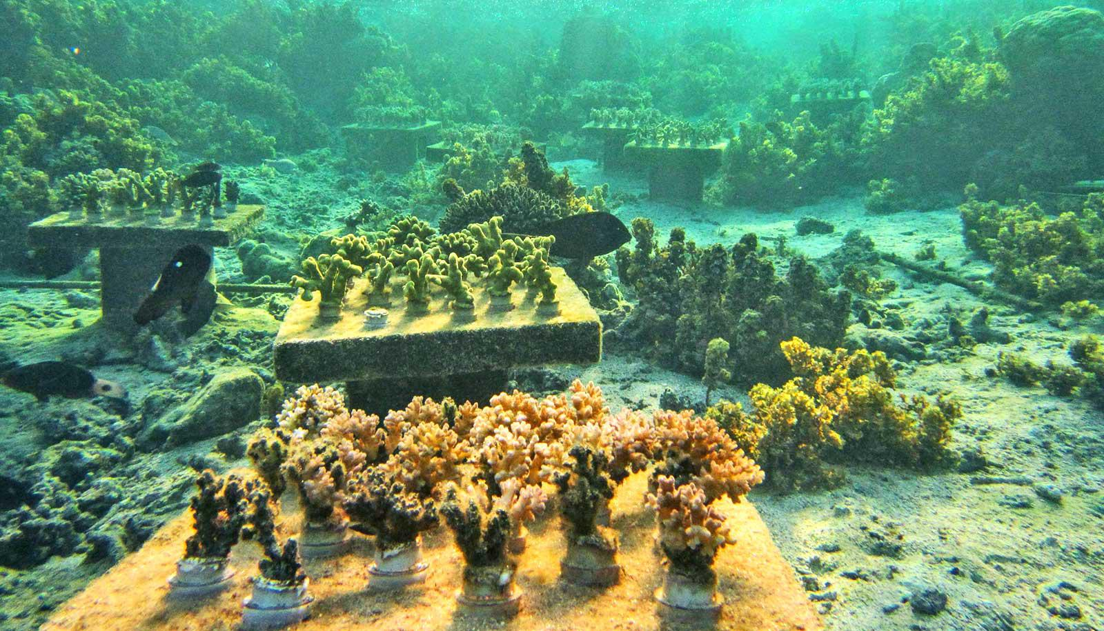 coral tables underwater