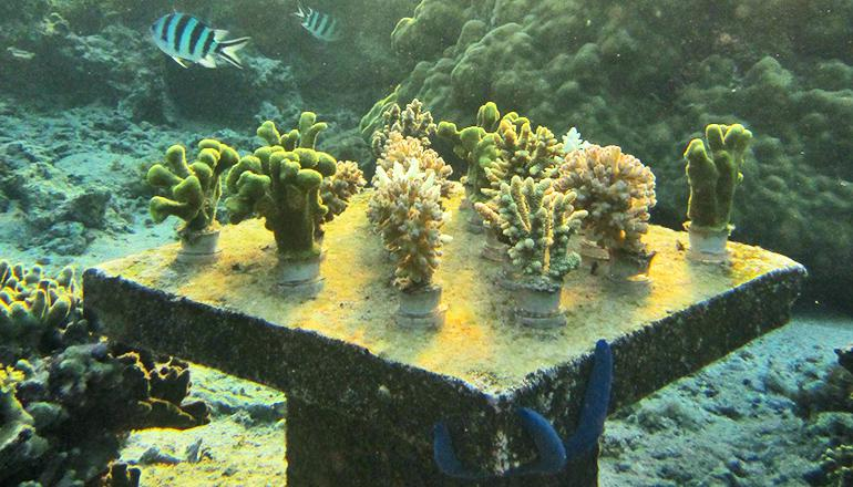 coral table 2