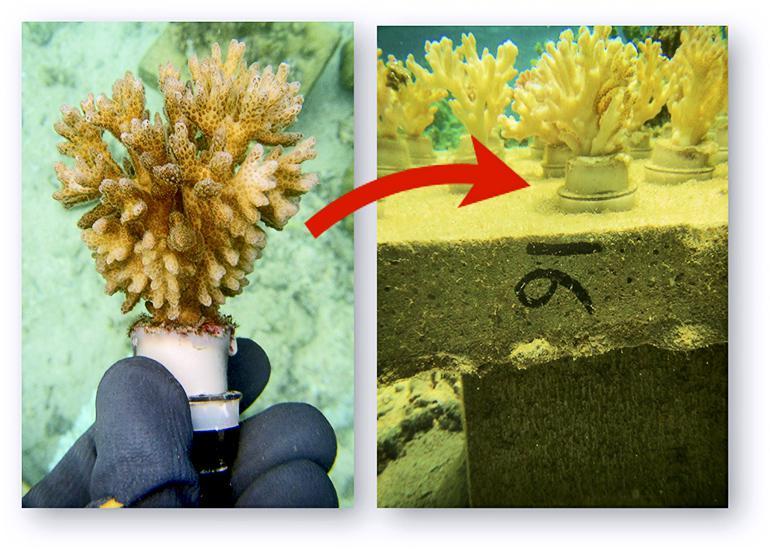 coral table breakdown
