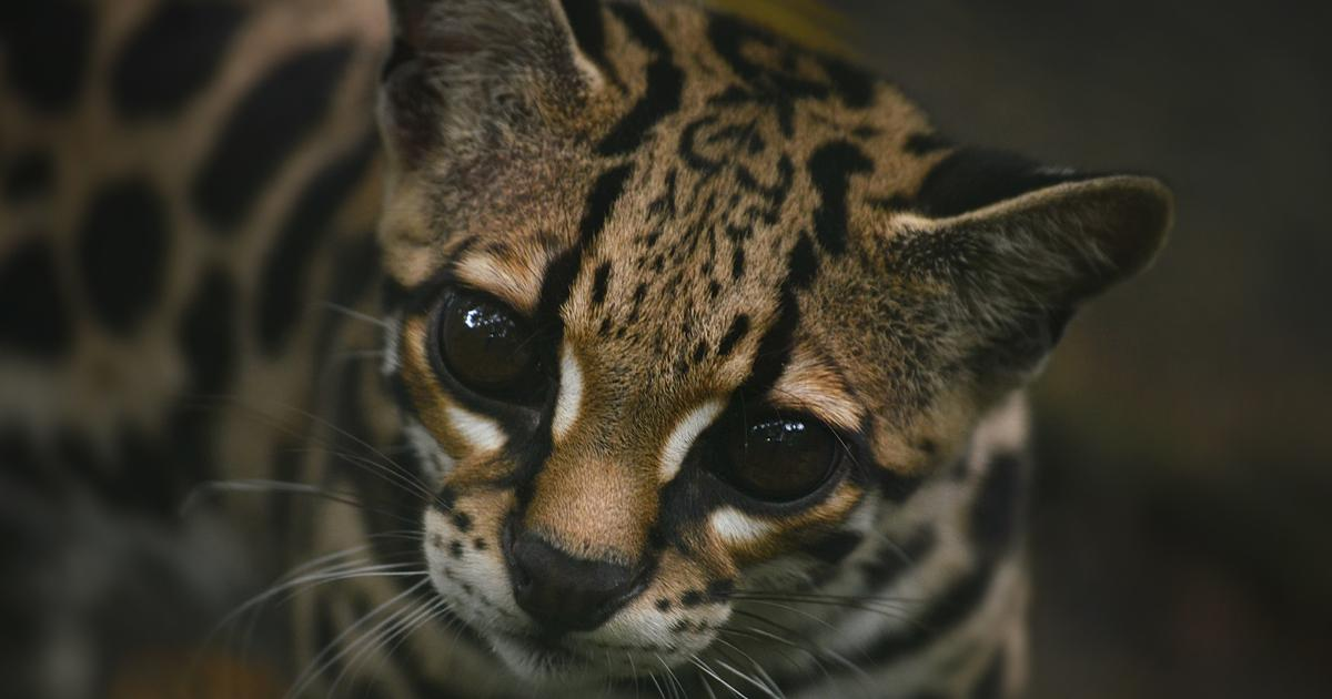 Understanding the Endangered Species Act of 1973