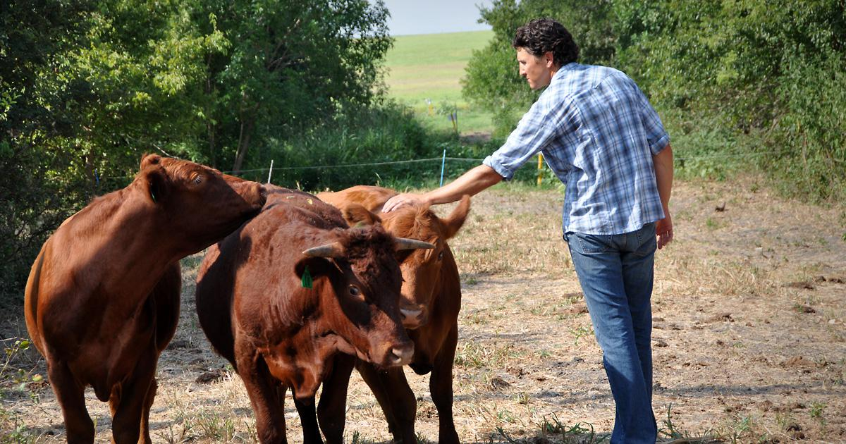 Farmer using diverse cover crops and animal grazing to build soil health.