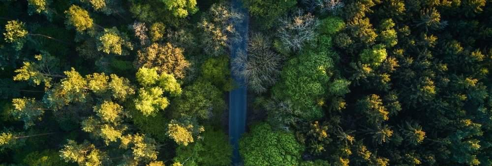 A forest, as captured by a drone.