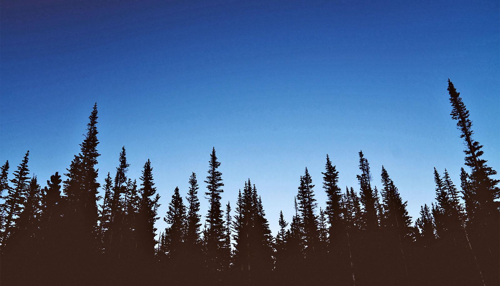 The silhouettes of trees show up black against a blue sky as the sun goes down