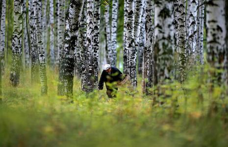 Ivanovo picking mushrooms in the forest