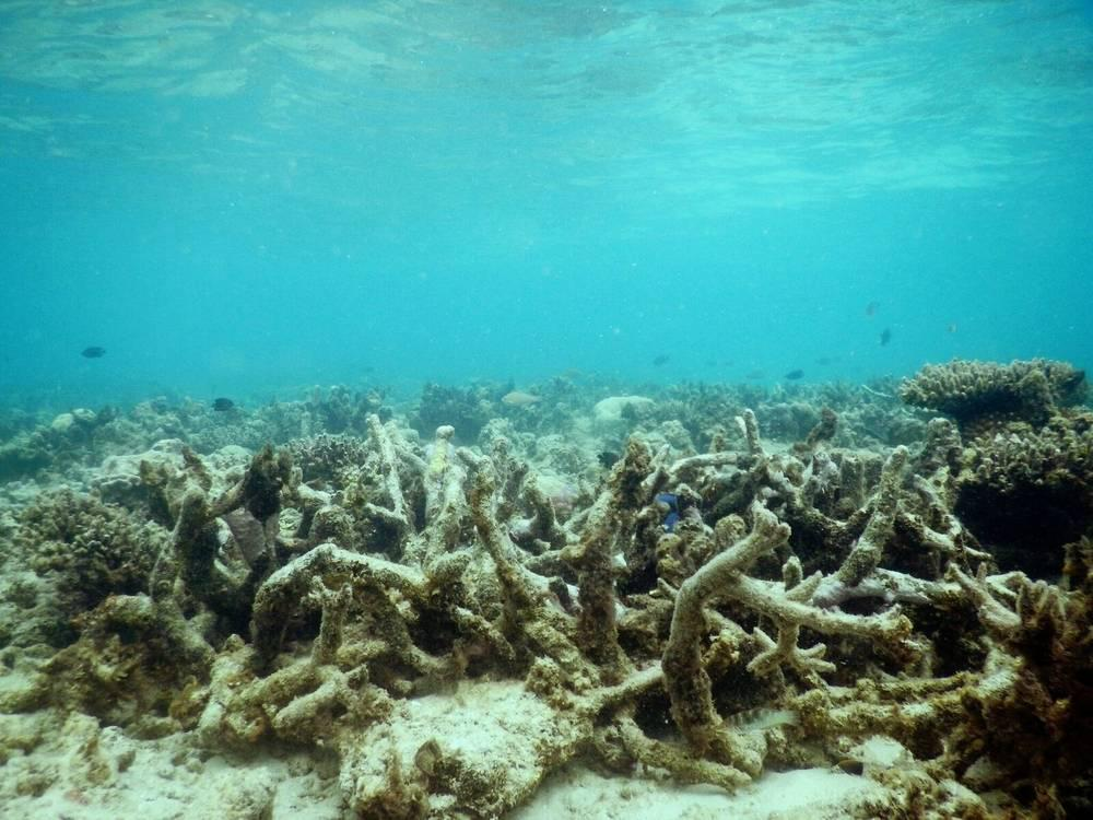a degraded coral reef