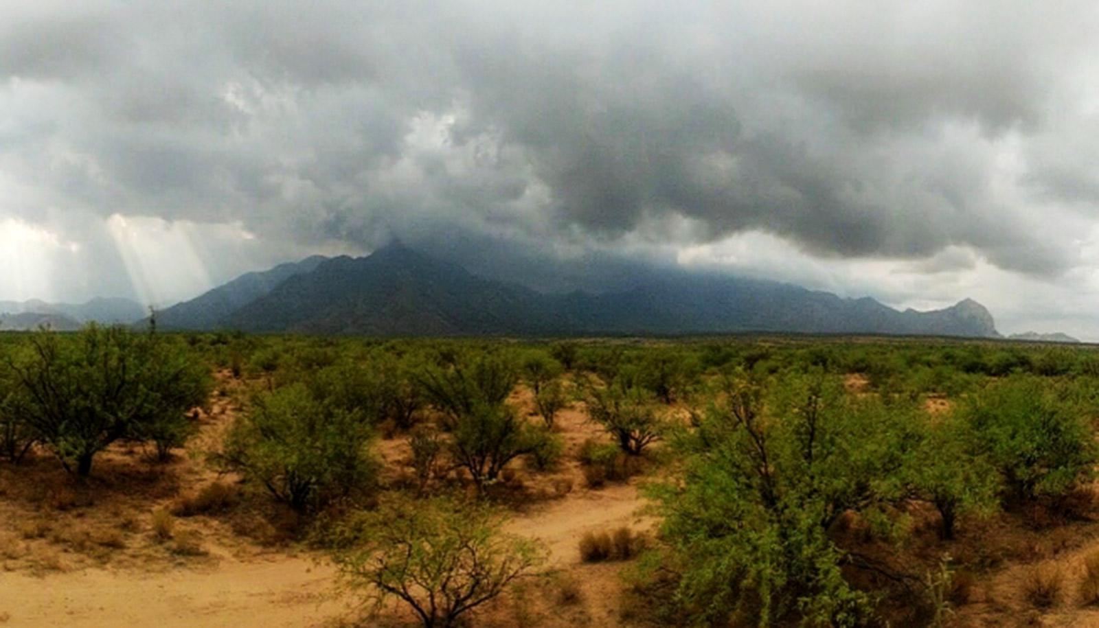 arid landscape with scrubby bushes in foreground; mountains with monsoon clouds in background