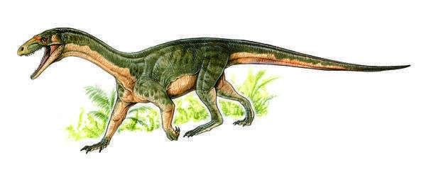 dinosaur like lizard with long neck and tail