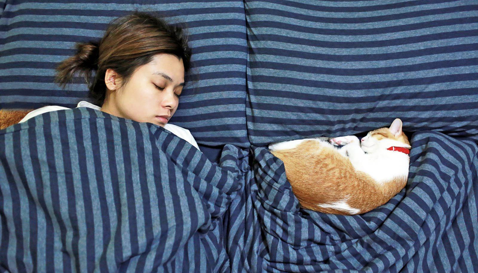 woman asleep in navy bed with cat