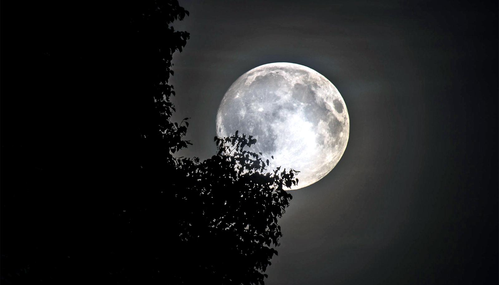 moon behind tree (siderophile-elements concept)