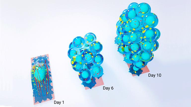 stem cell process