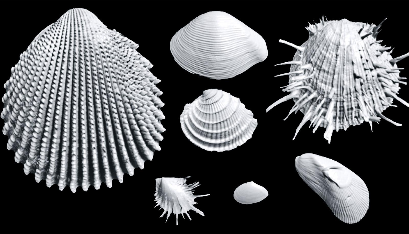 3D images of shells