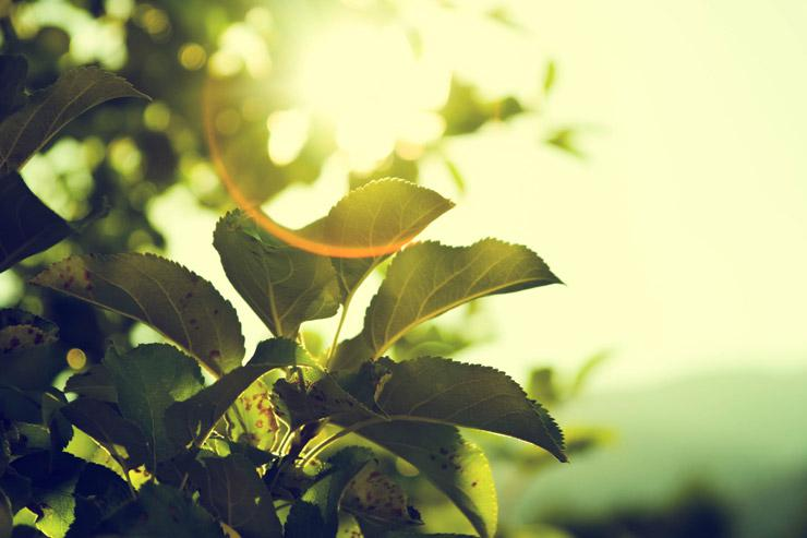 Living a Higher Vibration for Better Health and Greater Purpose, by Sam Glory. Photograph of sun and leaves by Micah Hallahan