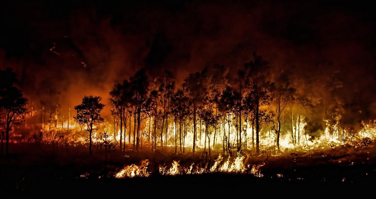 A back burn set by fire fighters. Fire fighters set small scale fires as a form of forest management.