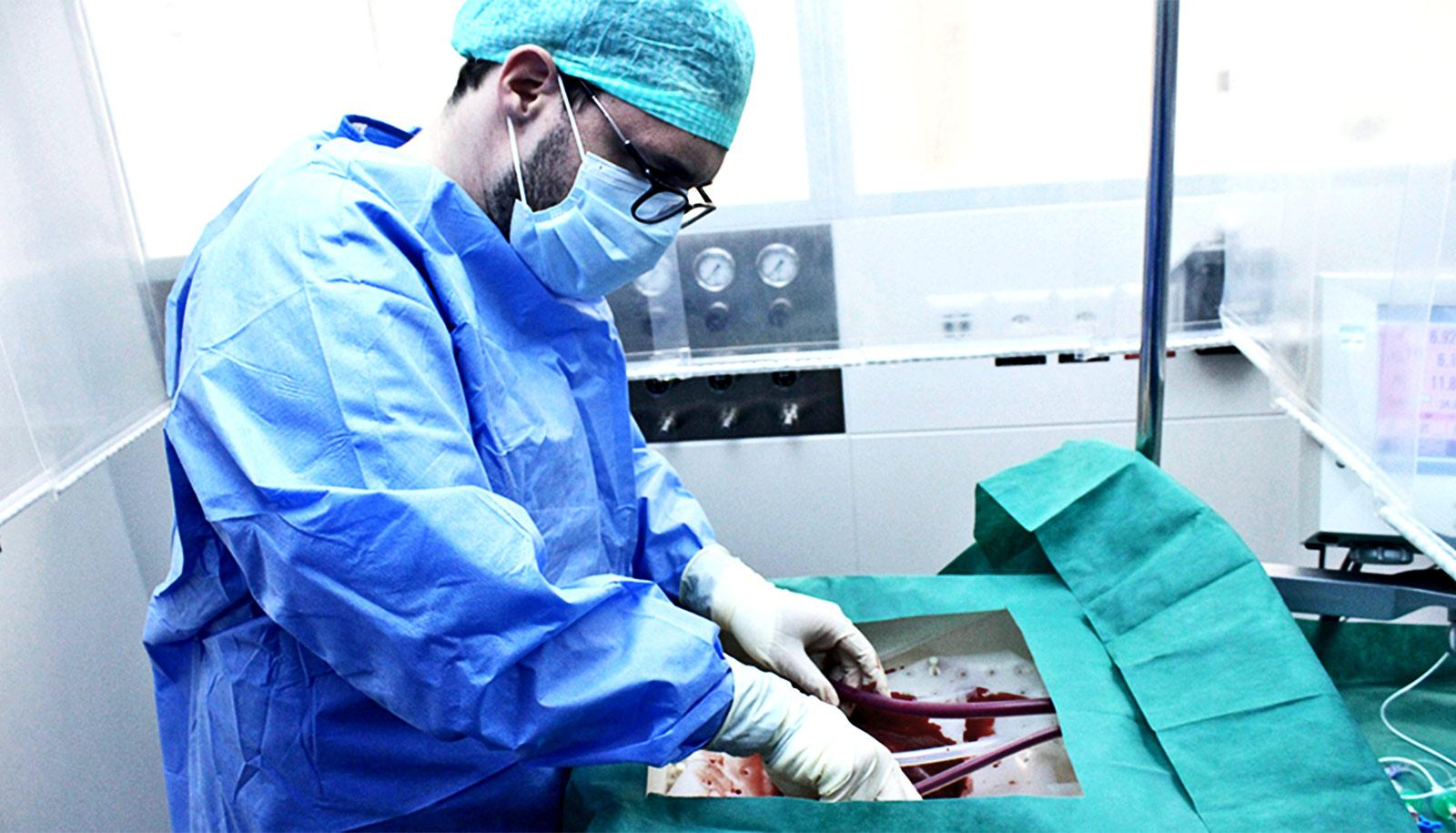 A researcher in blue scrubs, white gloves, a face mask, and green hair net places a liver in the perfusion machine