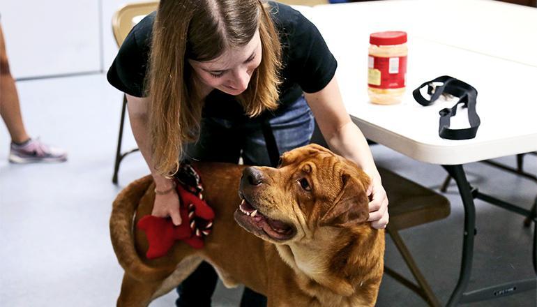 Dog shelter dog