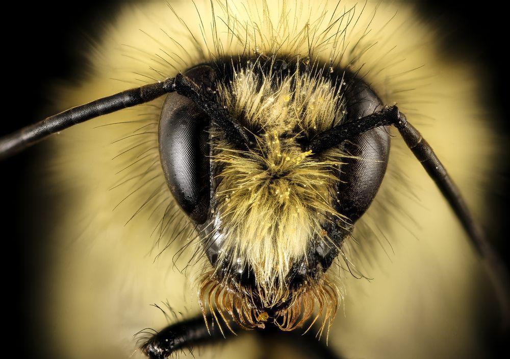 bumble bee face