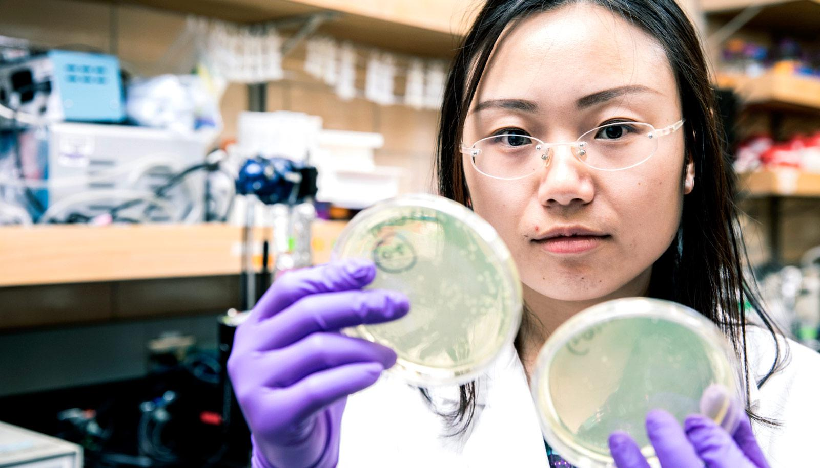 researcher holds up two petri dishes with agar