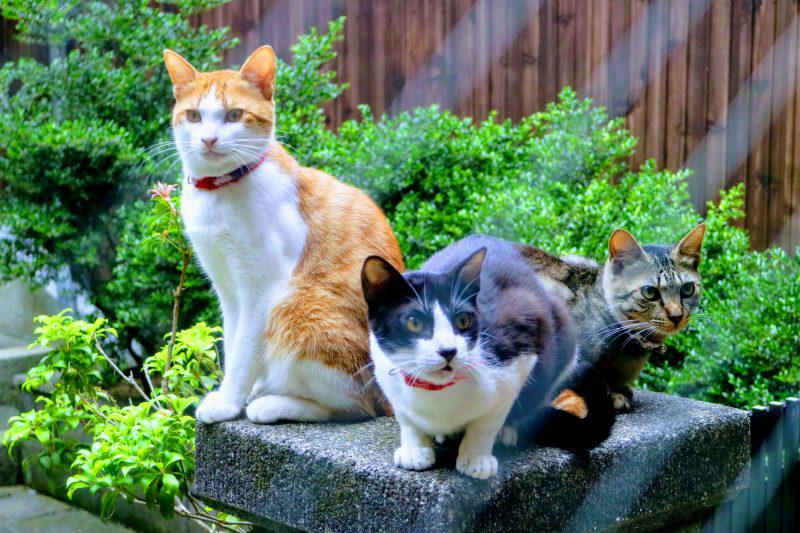 japanese cats