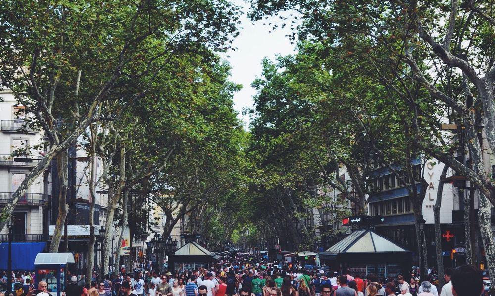 trees on a street