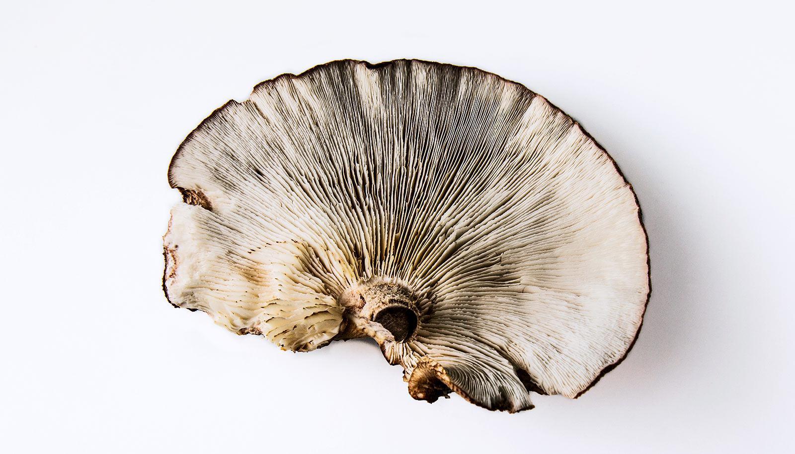 mushroom brain