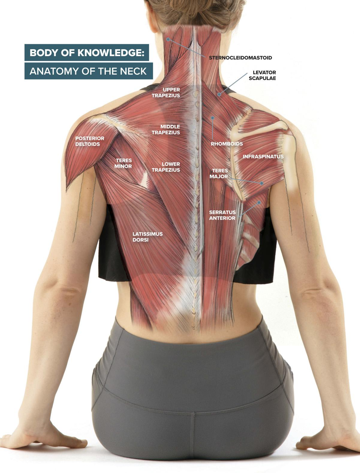 Get to Know … Your Neck Muscles | Scribd