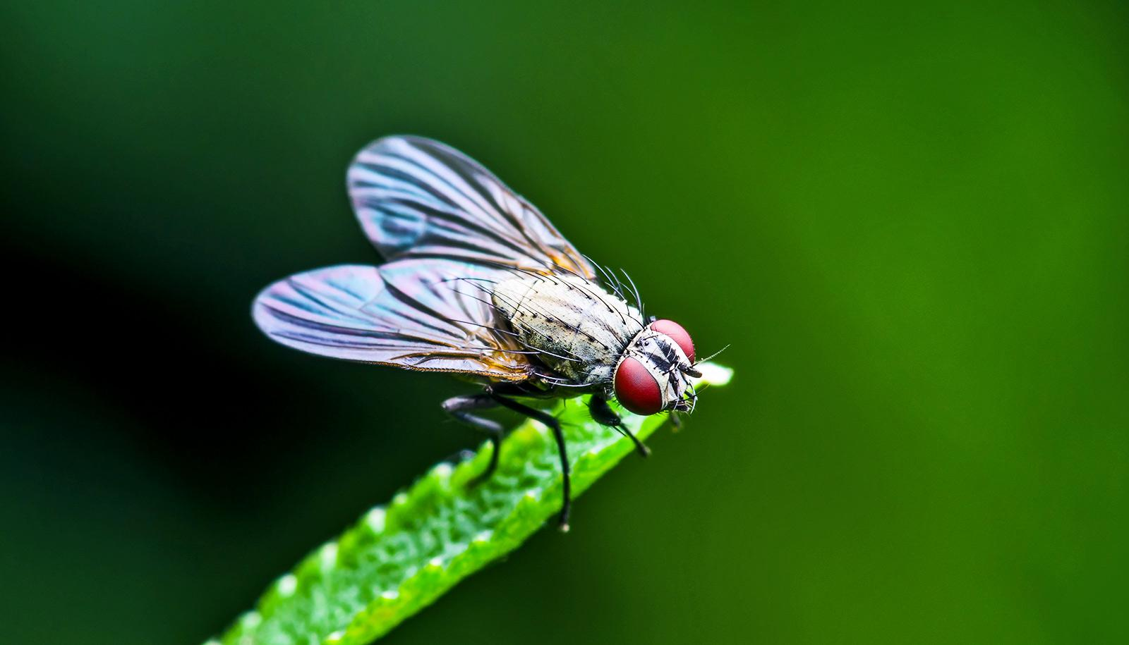fruit fly on grass