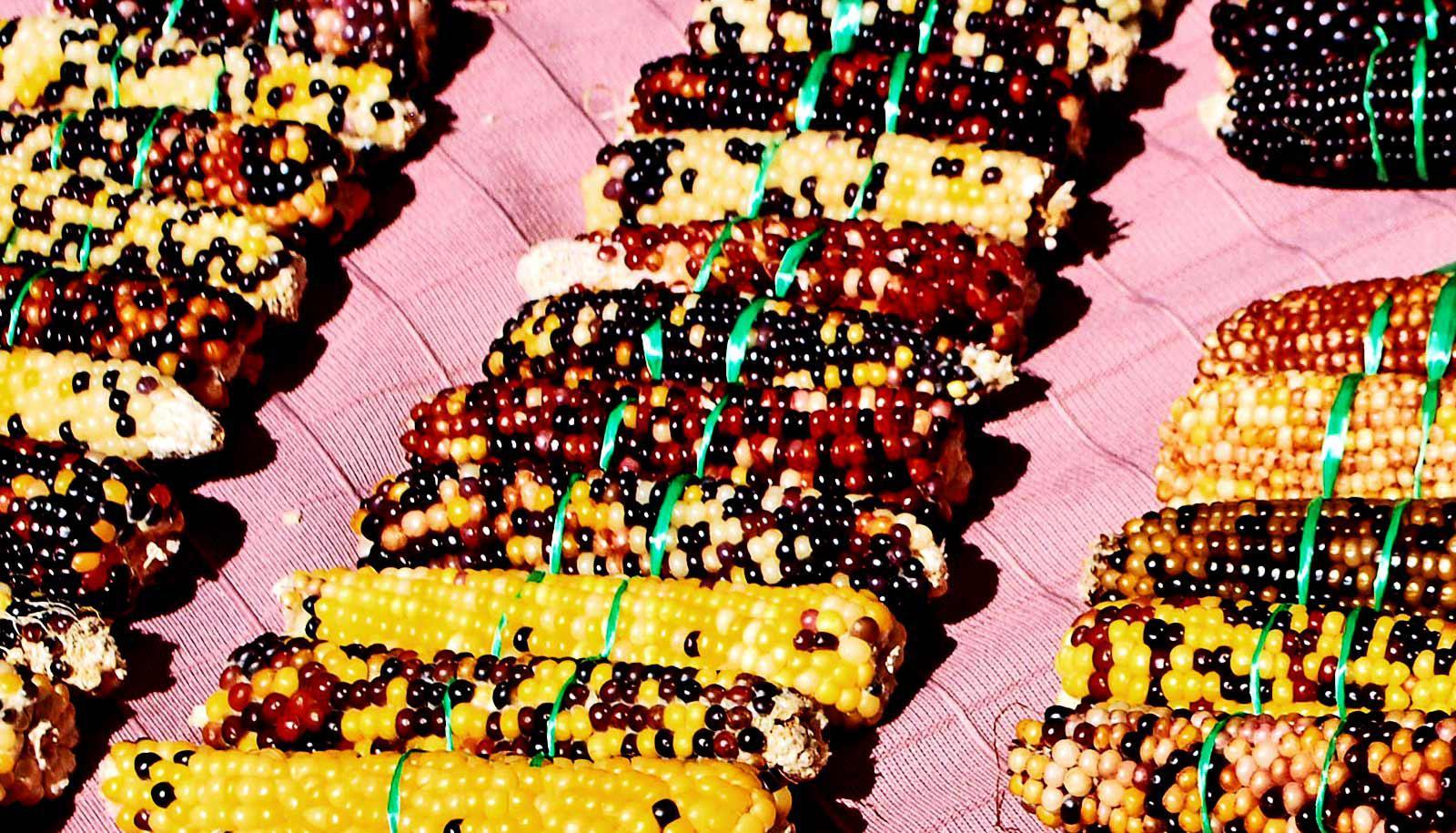corn on pink