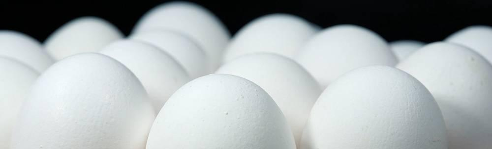 Eggs could power a clean energy future.