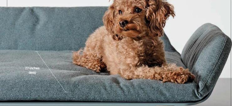 A 1000 Bed For Your Dog Scribd