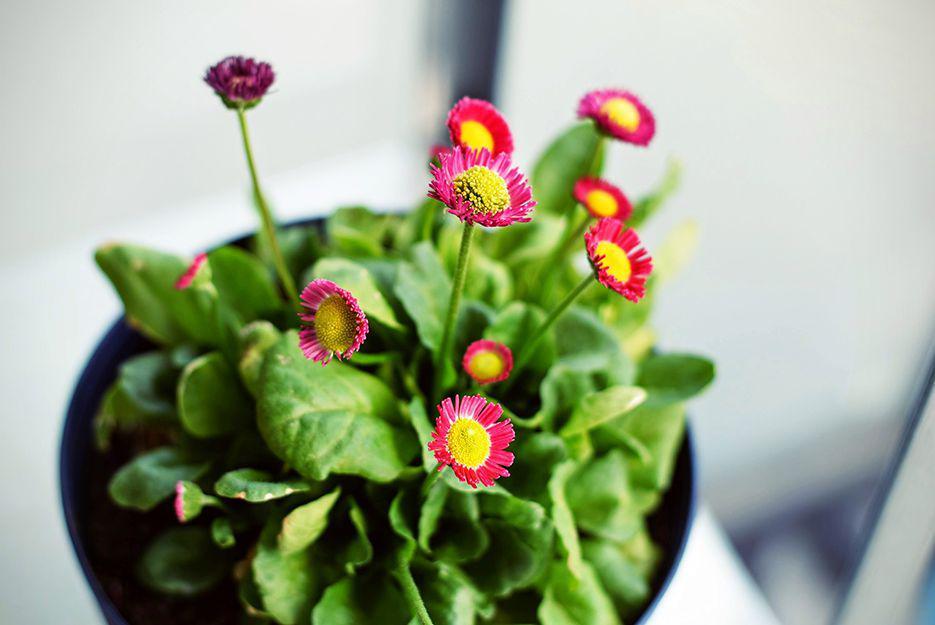 Grow plants easily indoors.