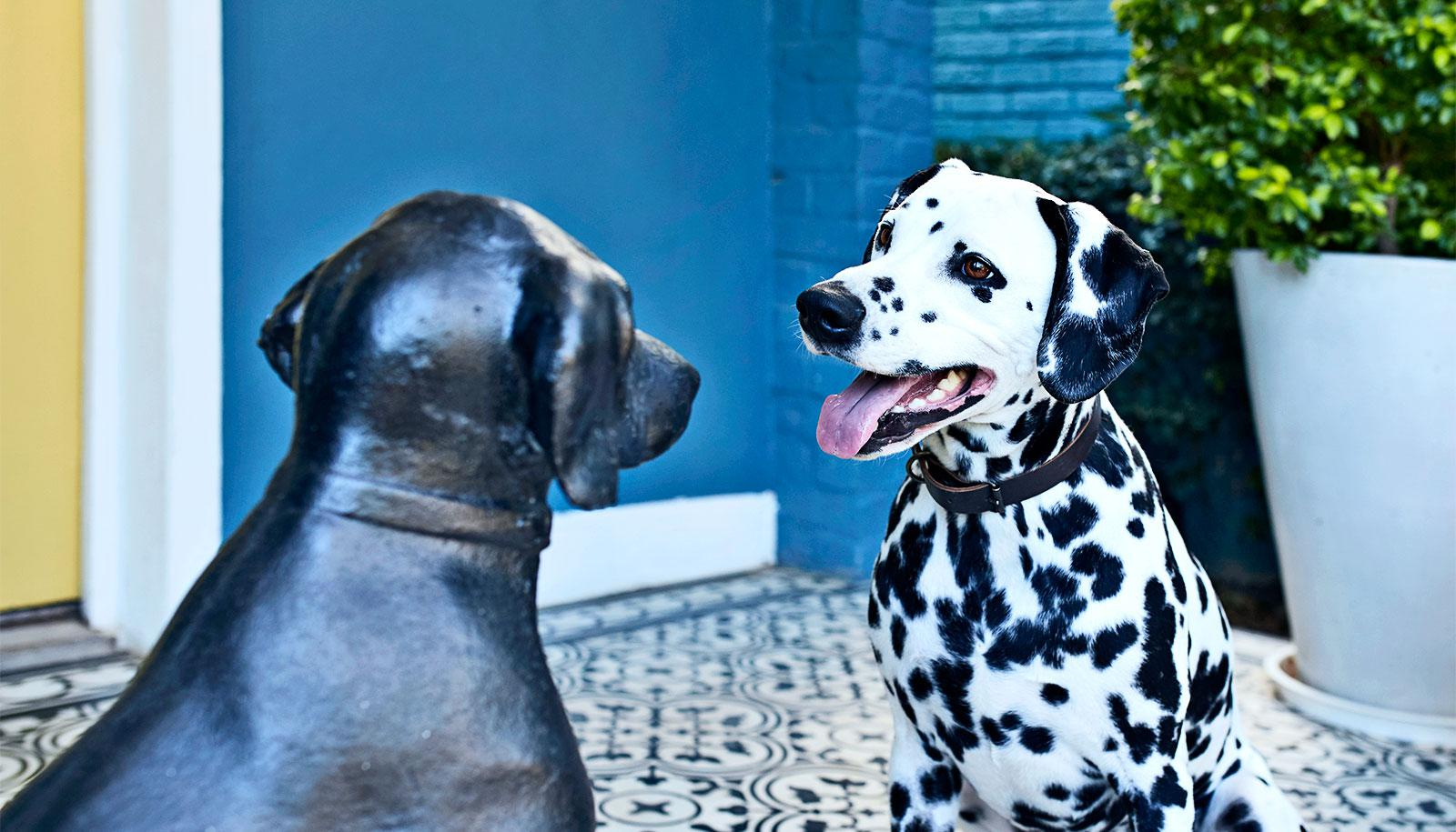 dalmatian statue reflection (dog personality concept)