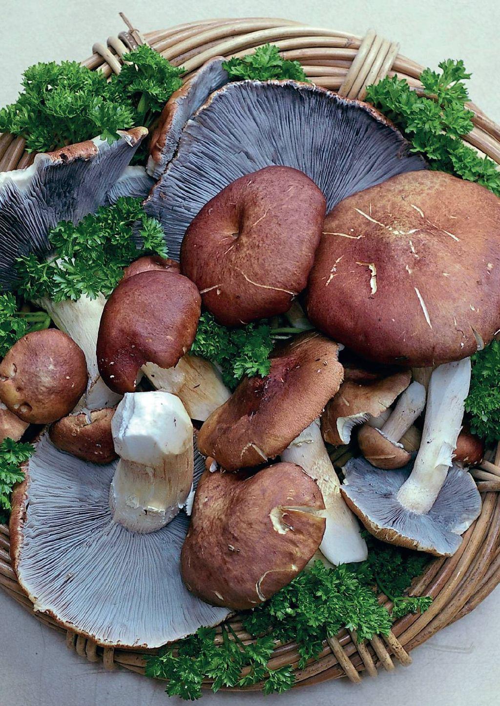 Make Room For Mushrooms | Scribd