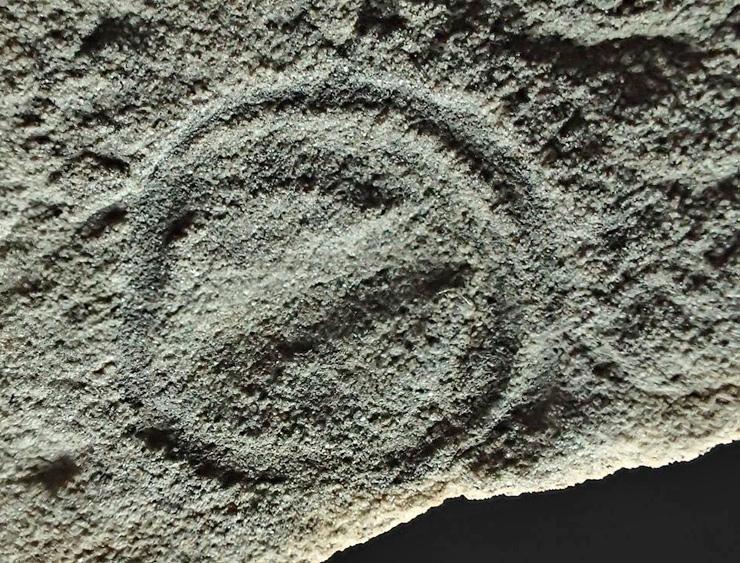 Parvancorina minchami fossil.