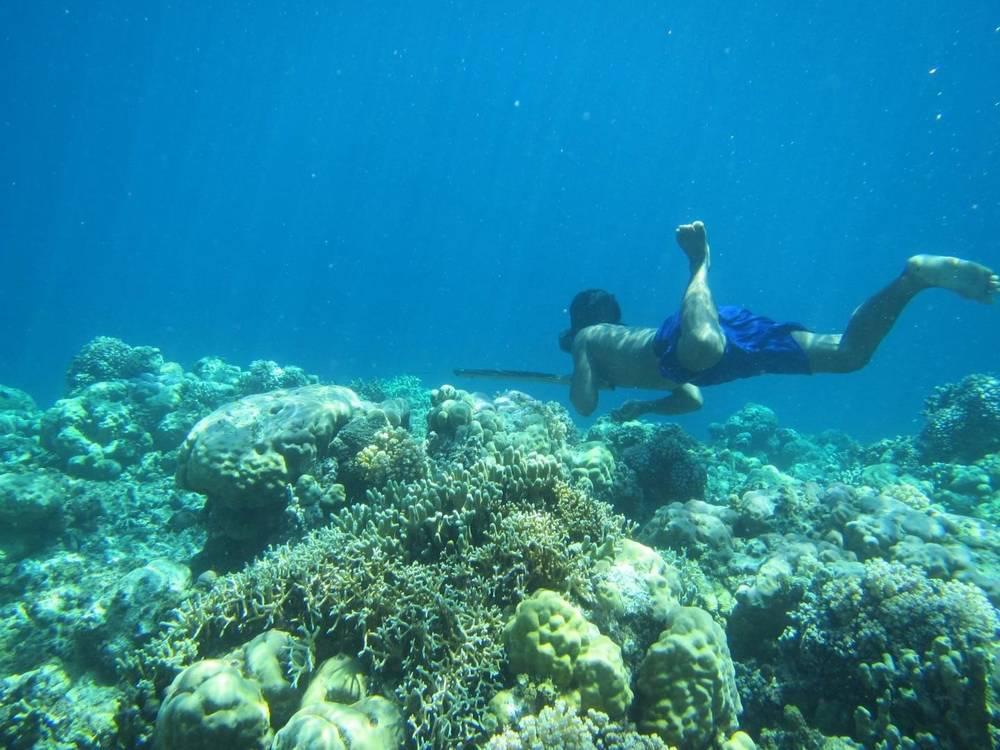 bajau free divers