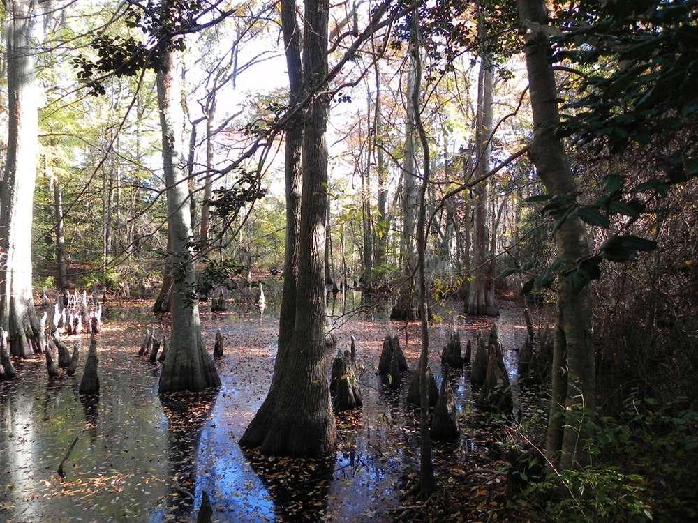 the book of swamp bog trees shrubs and wildflowers of eastern freshwater wetlands