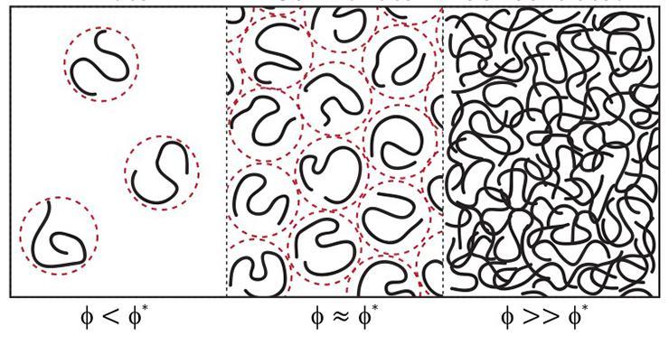 membraneless organelles illustration