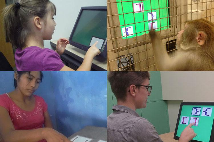 Three people take the test (two on a screen and one on paper) while one monkey also looks at a screen