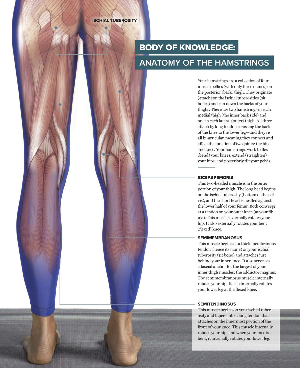 Get to Know … Your Hamstrings | Scribd
