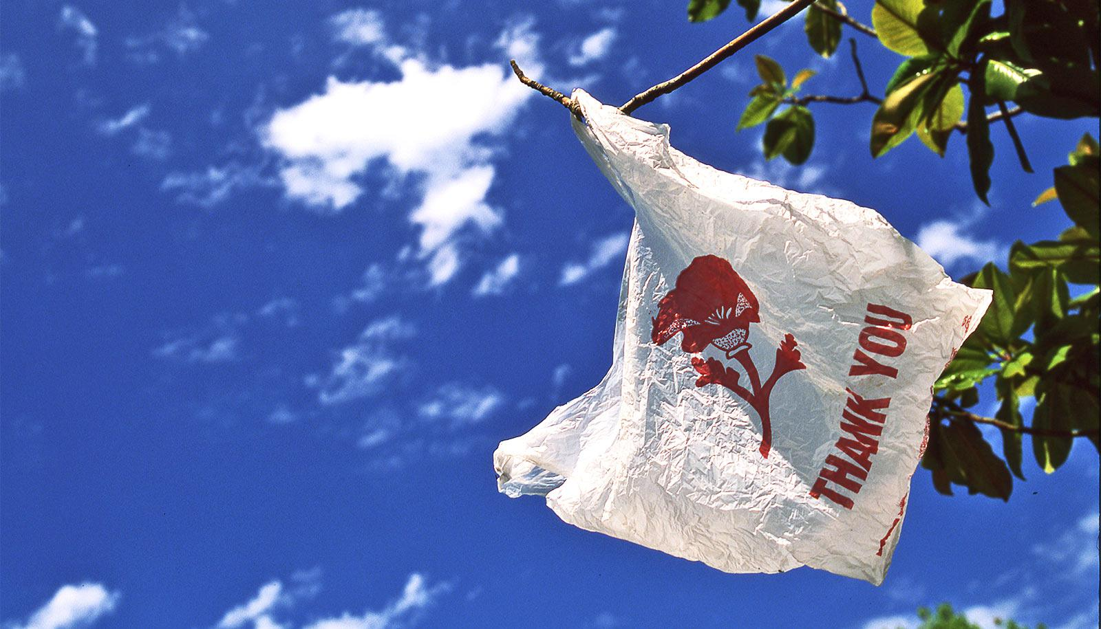"""A plastic bag hanging from a tree has the words """"Thank You"""" on it"""