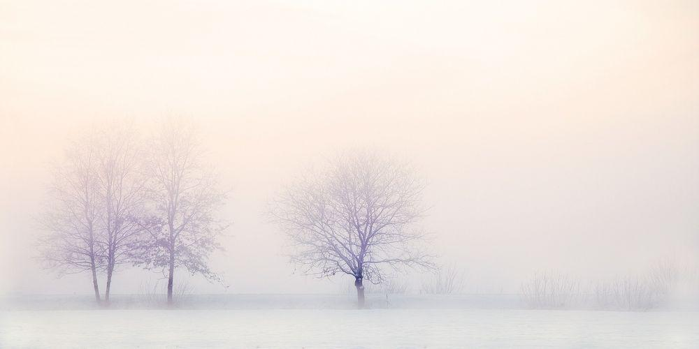 winter landscape trees