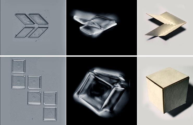 folding exoskeleton shapes