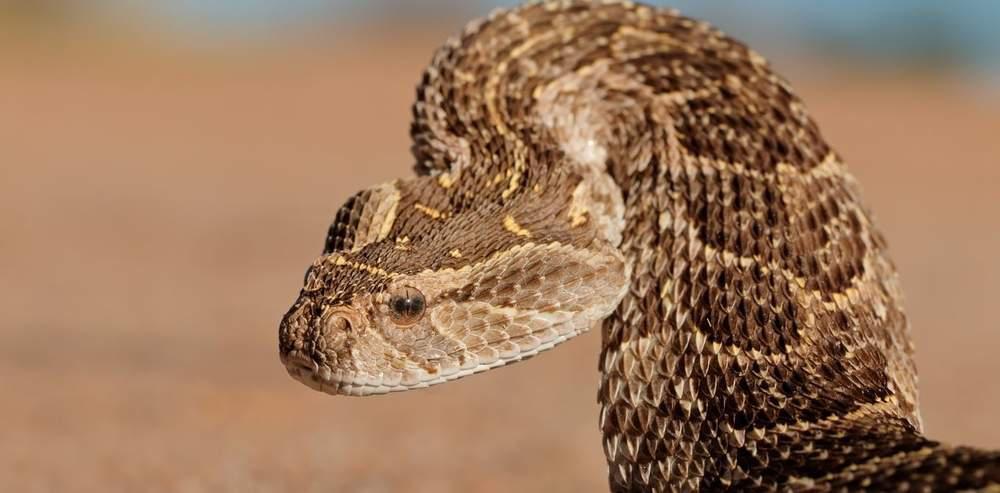 close up of a snake